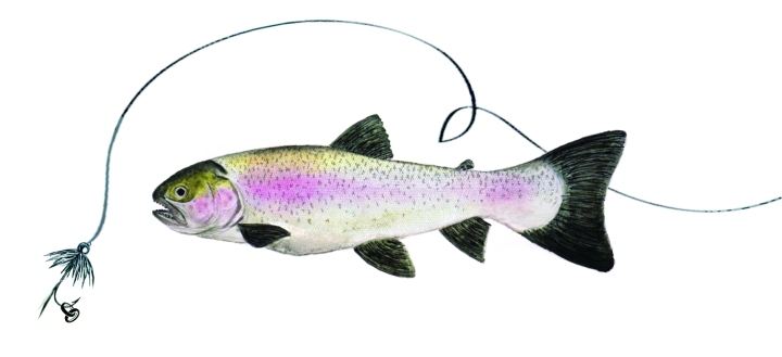 Fly Fishing and RainbowTrout